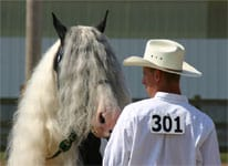 Daniel and Slainte at Double Points Show in Wapak Ohio, hosted byt the Gypsy Vanner Society