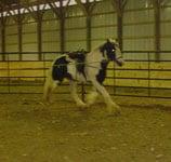 Apollo, Drum Horse, aug 2005