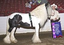 Slainte, Supreme Grand Champion Vanner, Ohio State Fair 2006, Photo by Brian Reidman