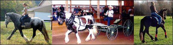 Three year old Drum stallion, Killian, 4 year old Vanner Mare, Molly. 3 year old Friesian gelding, Keenan.