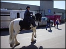 Vonnie and Drum Horse Guinness warm up for the Breed Demo